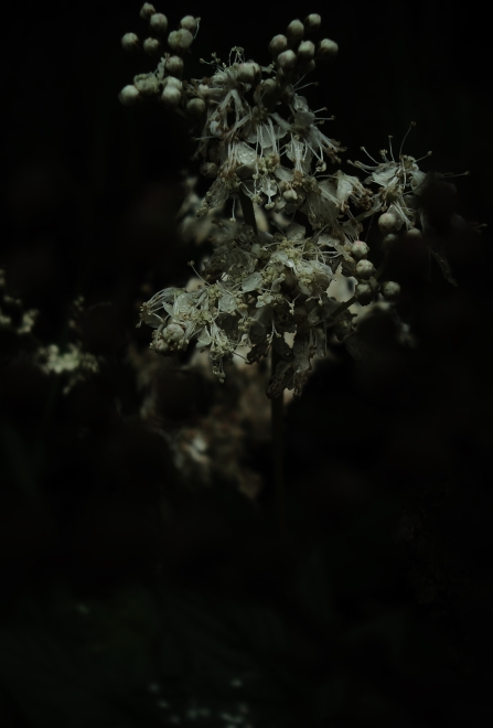 BLNE15-07